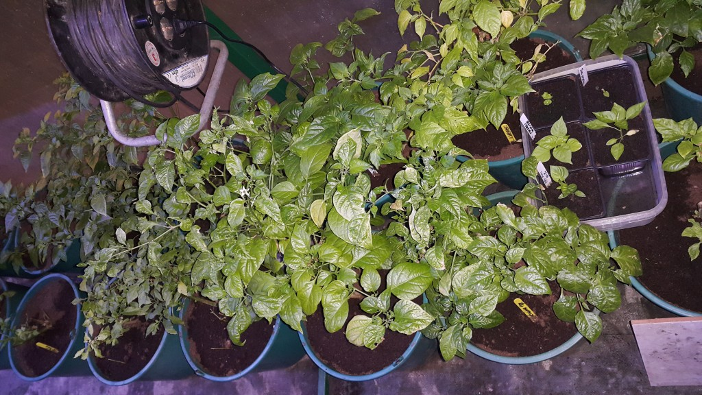 Prezimljene biljke iz 2015g