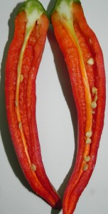 Presecen Plod